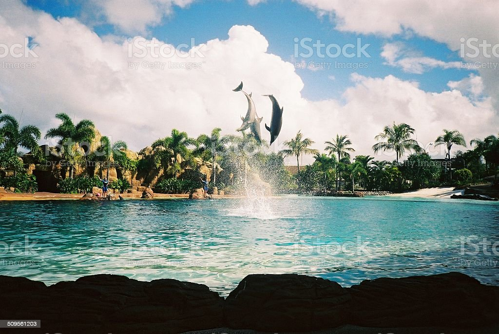 Dolphins jumping above the water stock photo
