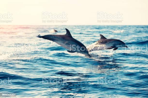 Dolphins jumping from the sea picture id869243054?b=1&k=6&m=869243054&s=612x612&h=otn wziifjtznll5qal9im6r1fnmmnn9rjlejokn7va=