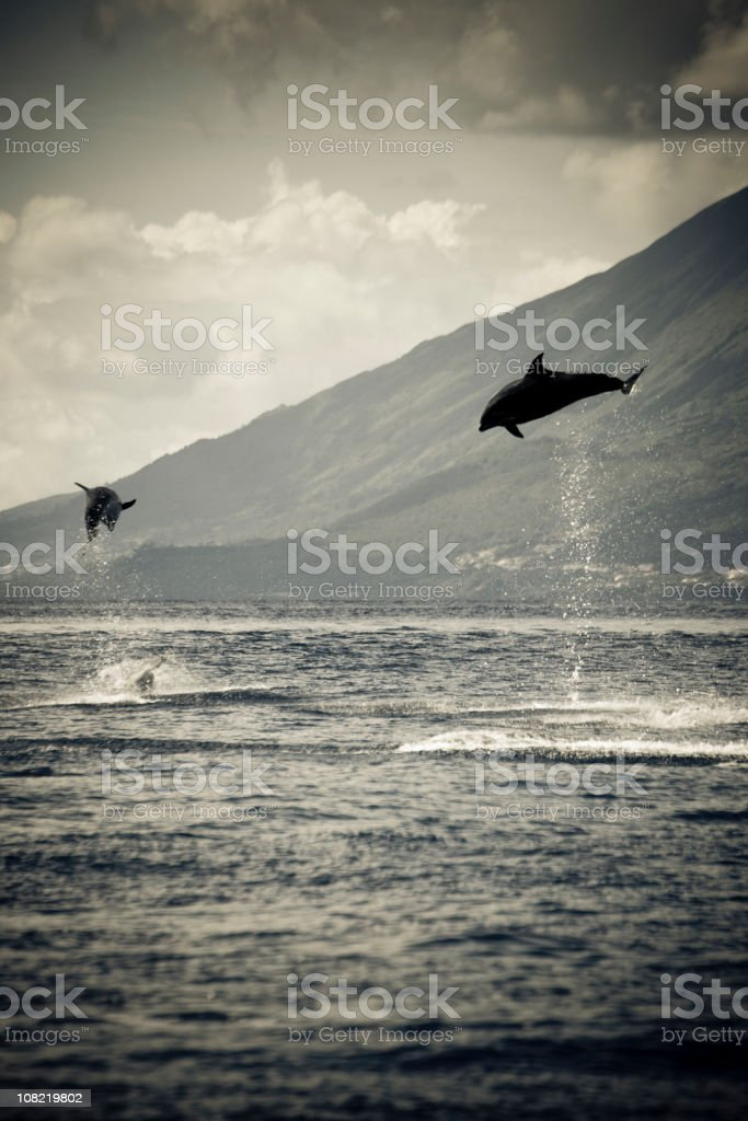 Dolphins Jumping in Ocean, Black and White stock photo