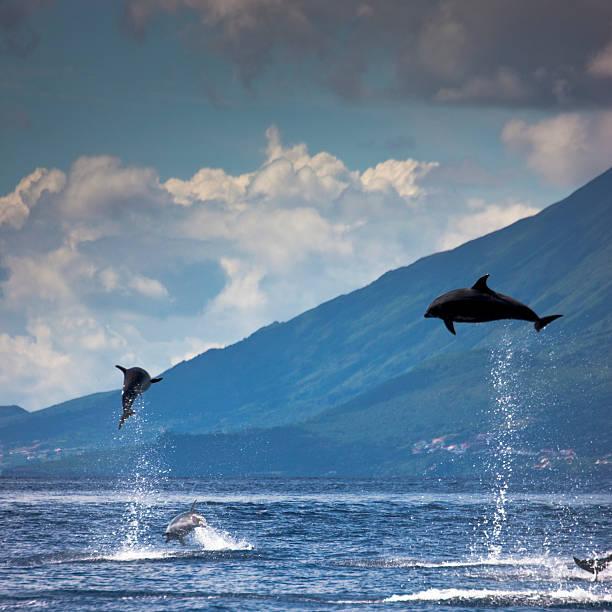 Delphine springen in der Luft – Foto