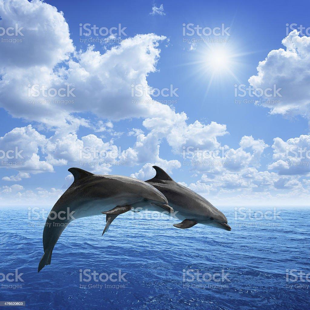 Delfines saltar - foto de stock