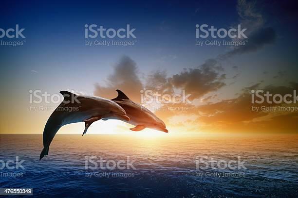 Dolphins jumping picture id476550349?b=1&k=6&m=476550349&s=612x612&h=goctlzrpwzqxazu7yvya3aeblwd722wz mnozjwwizo=