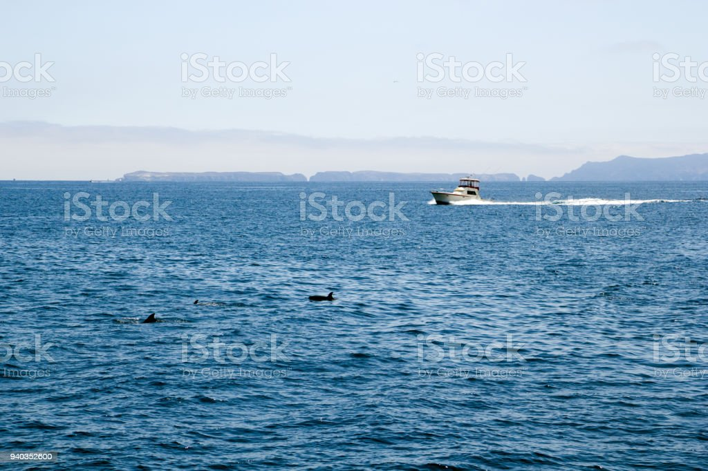 Dolphins near Channels Islands, California stock photo