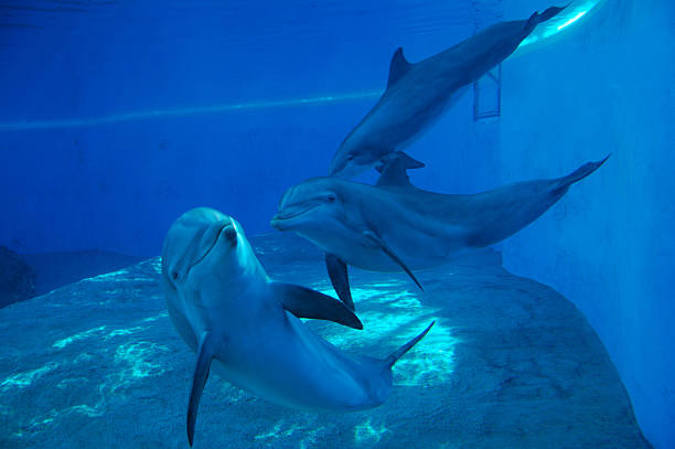 dolphins - animals in captivity stock pictures, royalty-free photos & images