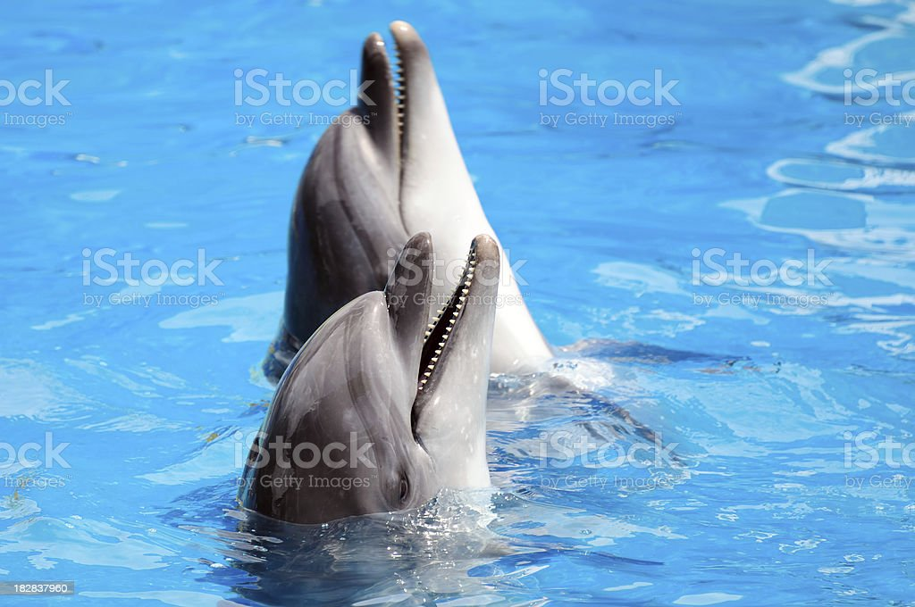 Dolphins stock photo