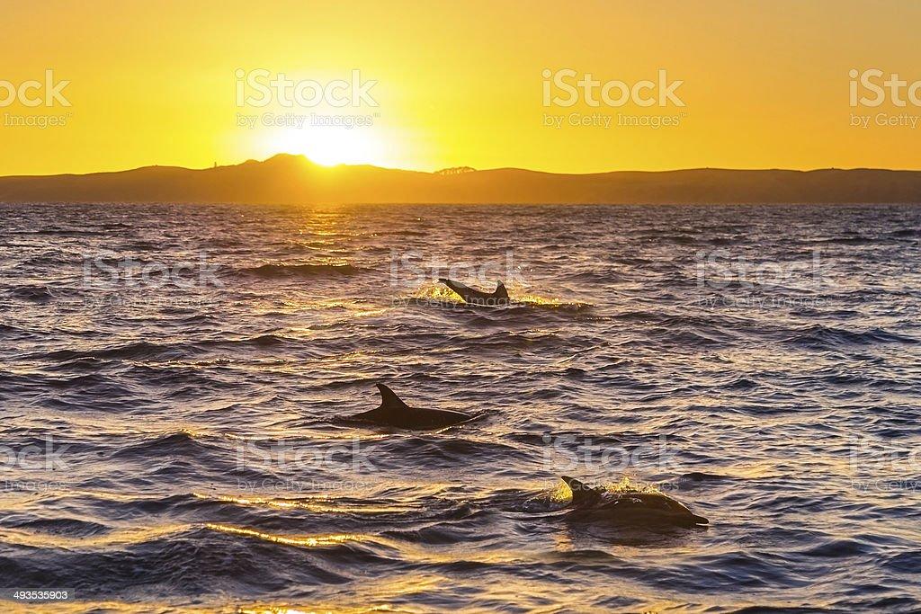 Dolphins stock photo