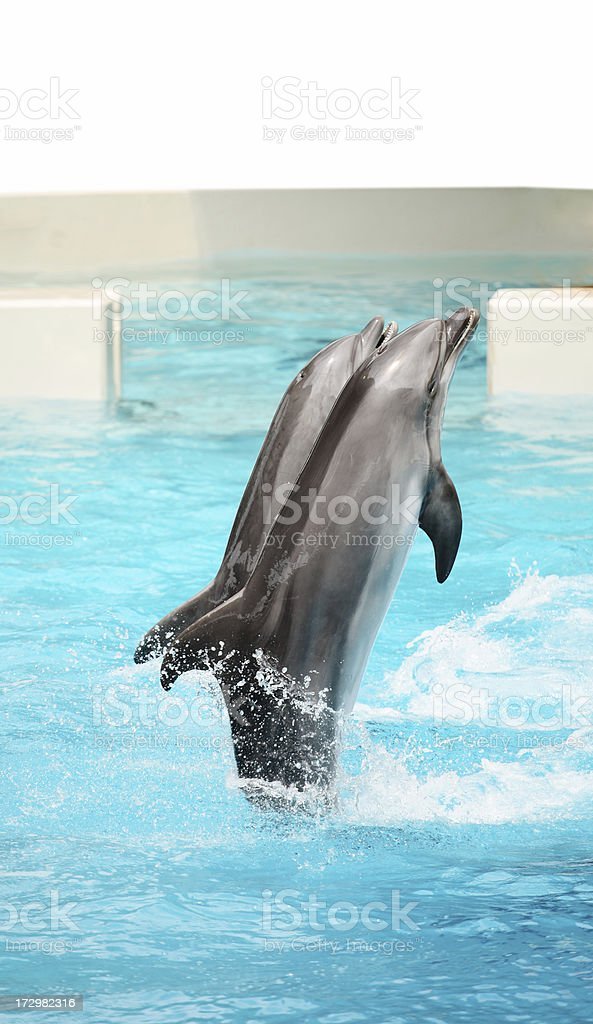 Dolphins playing. royalty-free stock photo