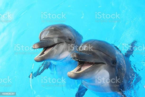 Dolphins swim in the pool picture id455606281?b=1&k=6&m=455606281&s=612x612&h=d1ofufwizp2thxp4tx6eofkrvdflkjnl3vlhmxe5j1m=