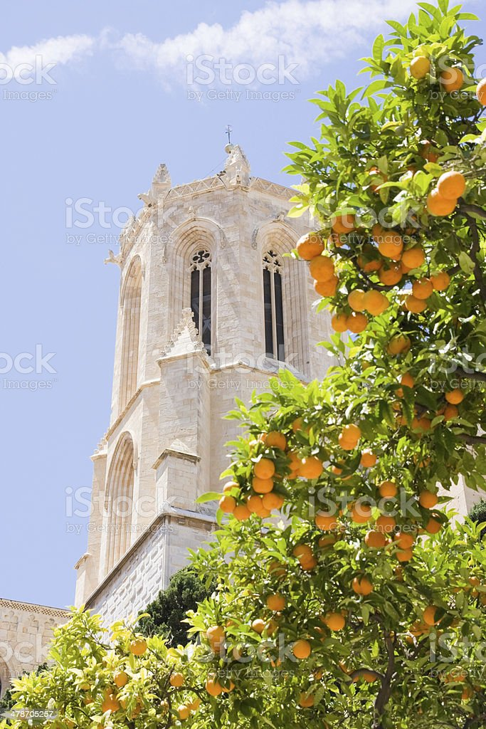 Dome of  Cathedral of Tarragona with tangerines, Spain royalty-free stock photo