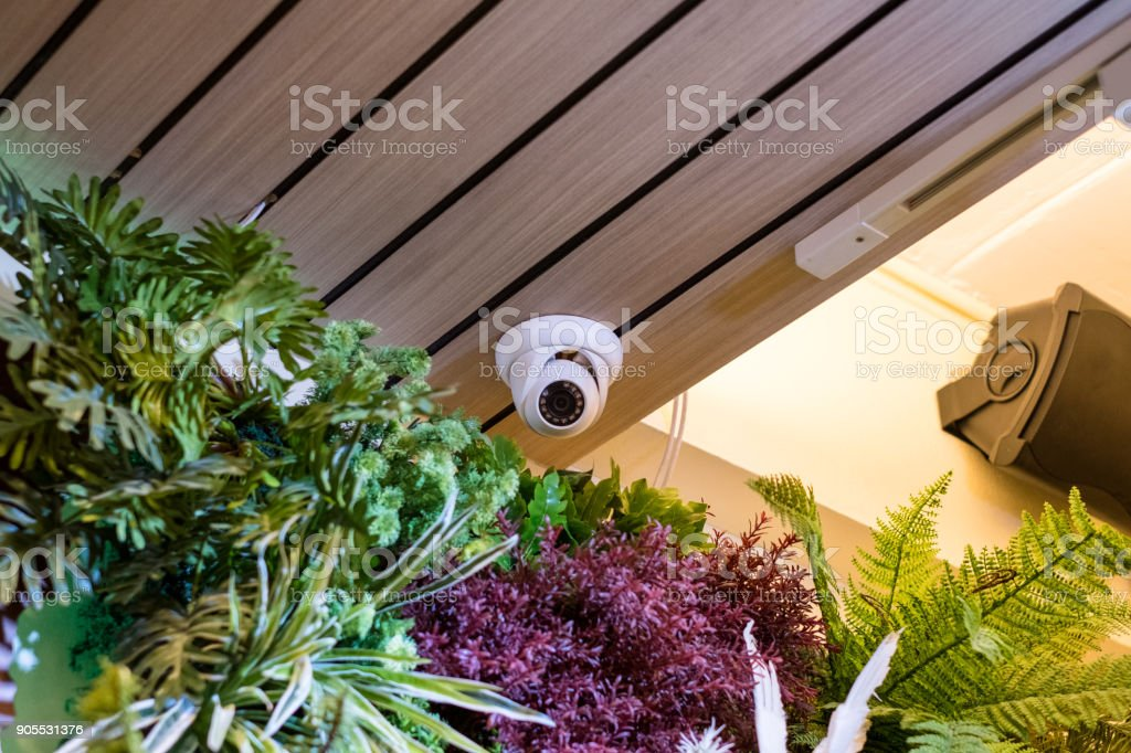 Dome security CCTV Hidden on corner room with plant decorate stock photo