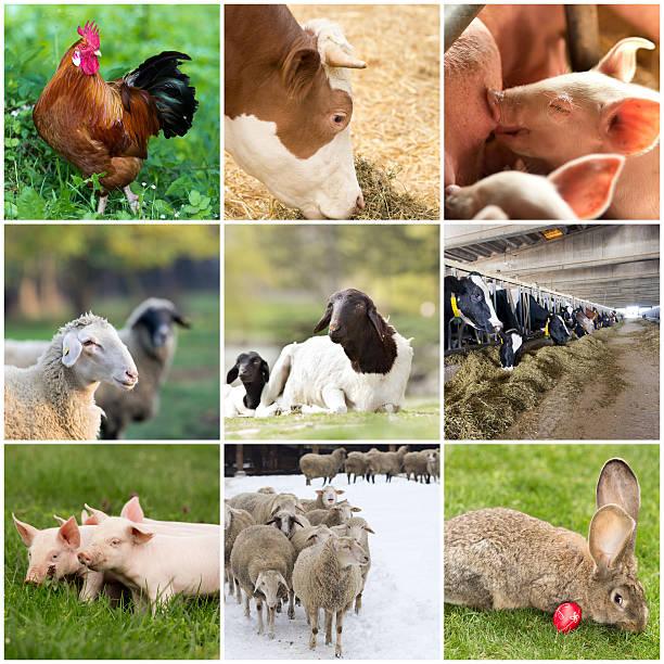 飼育動物 ストックフォト