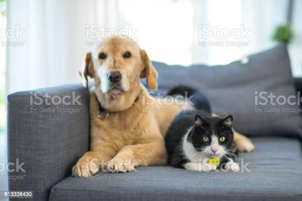 Domestic animals picture id813338430?b=1&k=6&m=813338430&s=612x612&h=cjr5ecuugm3g6bfj7we3q jdrv5me2vmt2ffqcbbcn0=