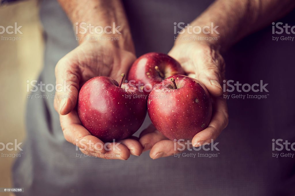 Domestic apples stock photo