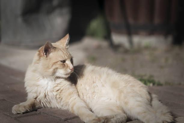 Domestic cat animal portrait stock photo