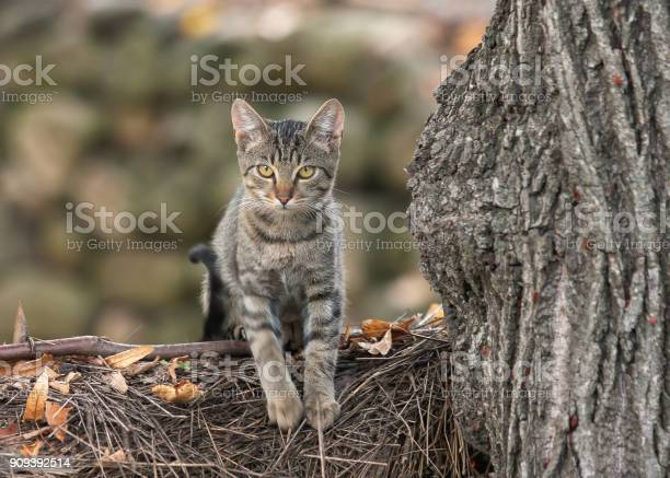 Domestic cat climbing on tree branch looking cute picture id909392514?b=1&k=6&m=909392514&s=612x612&h=x4woay5jam xwhkyyf58rqvfl 4mx0ljosll  x4qyw=