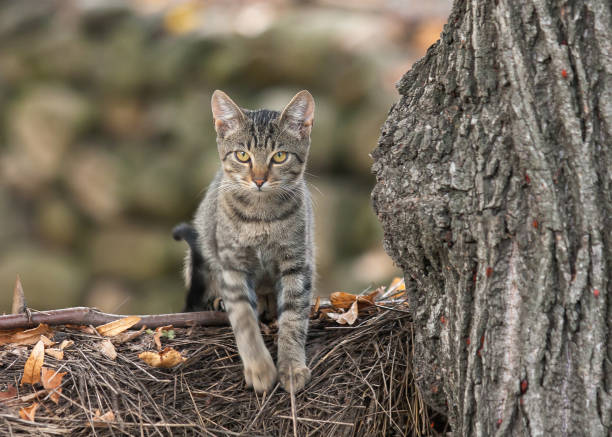 Domestic cat climbing on tree branch looking cute stock photo