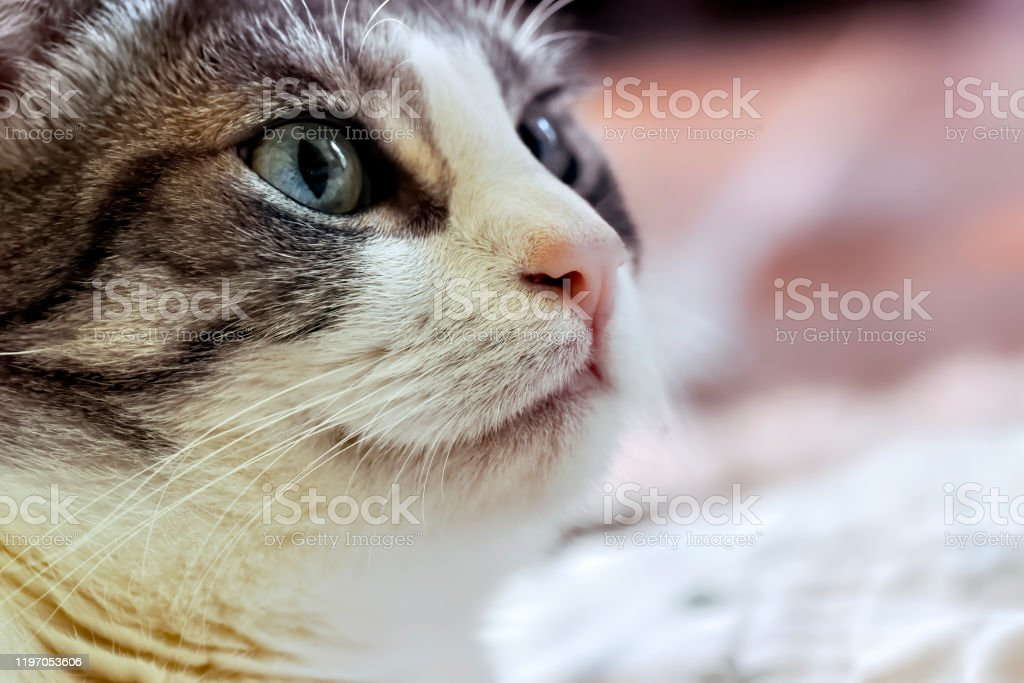 Domestic cat close up - Royalty-free Animal Stock Photo
