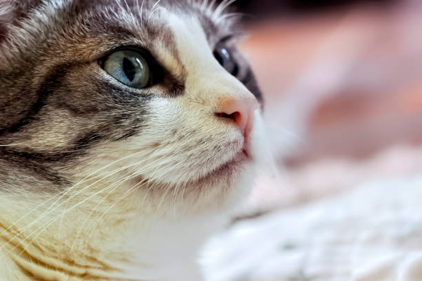 Domestic cat close up stock photo