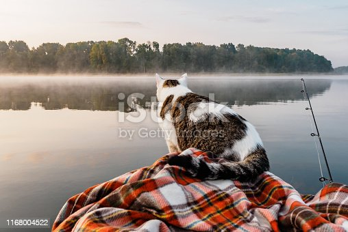 Domestic cat enjoys freedom outside the house on fishing with owners in the early morning in nature. The cat fishing on the inflatable boat on the river. A playful cat in an inflatable kayak rests together with its owners in the summer on the river. Leisure with pets outdoors.