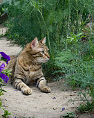 Domestic cat for the first time in nature
