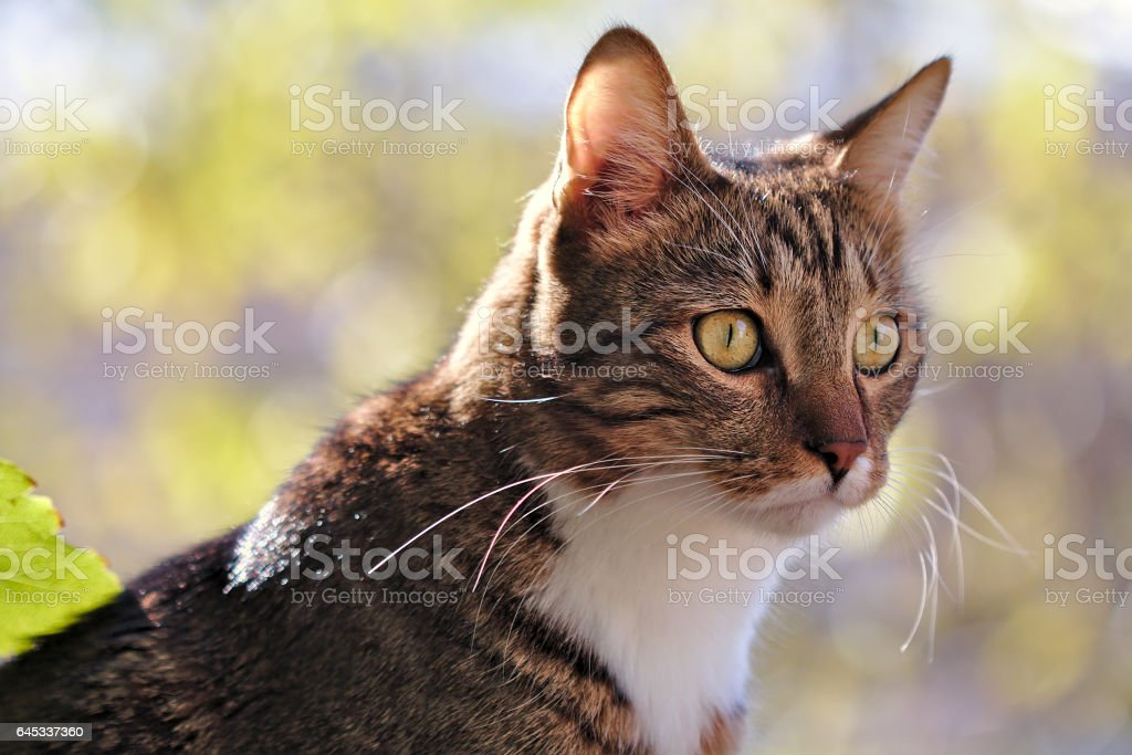 Domestic cat in a sunny day stock photo