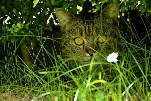 Domestic cat in garden