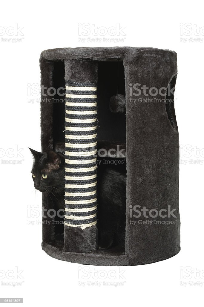 Domestic cat in the scratcher royalty-free stock photo