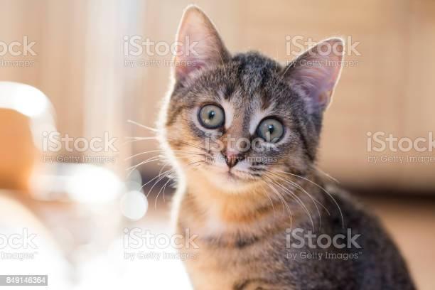 Domestic cat in the sun rays picture id849146364?b=1&k=6&m=849146364&s=612x612&h=jgllmxlcdvky2r2y2pcmsipju8qo83g8dzddiruar14=