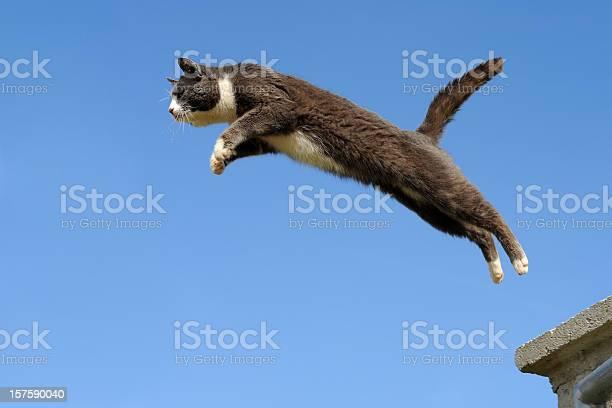 Domestic cat jumping picture id157590040?b=1&k=6&m=157590040&s=612x612&h=ciruuvqxzwkrvhmkj48bzilndvgtb8neevyw8i4ikvq=