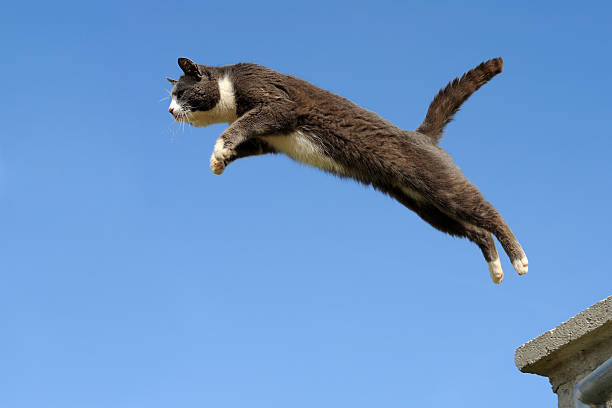 Domestic cat jumping picture id157590040?b=1&k=6&m=157590040&s=612x612&w=0&h=y3at8mcdwxvihcja4vygaora4htj6ar 085bumruh g=