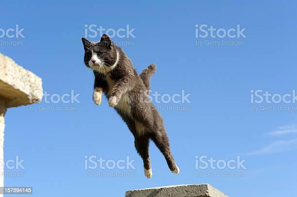 Domestic cat jumping picture id157594145?b=1&k=6&m=157594145&s=612x612&h=6yopt7kqdevjzeaeuz08m99rq8sccp3o 6zvrd0r3p0=