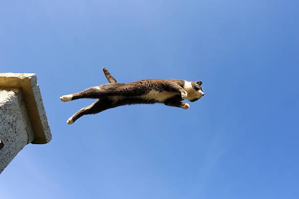 Domestic cat jumping picture id182742862?b=1&k=6&m=182742862&s=612x612&w=0&h=nacclqc s nhmnaxkonelax80y3v4 fsw0yxrjc5jp0=