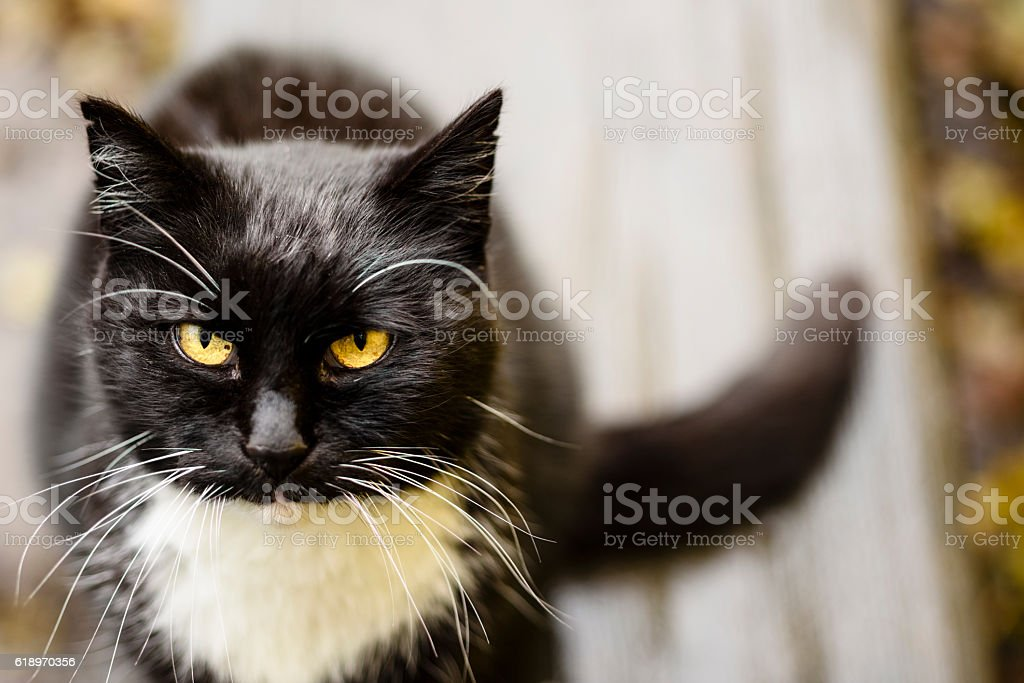 Domestic cat looking attentive stock photo