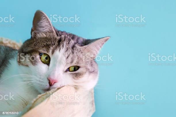 Domestic cat lying on the bed picture id878253010?b=1&k=6&m=878253010&s=612x612&h=y6vpwax  oviqviaq9ttwxtspwvsvjeebe y6zrq 5e=