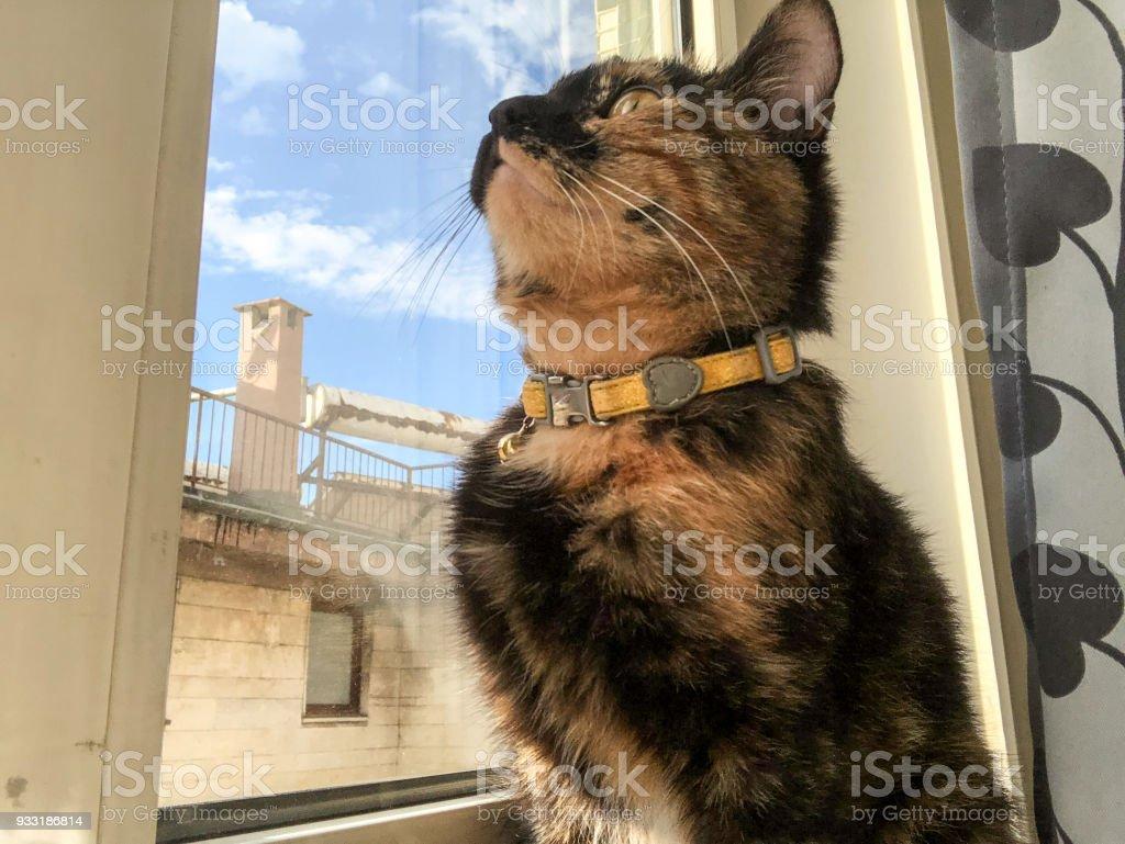 Domestic cat near window