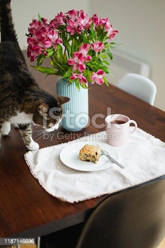 animal, tabby cat, dining table, flower, food