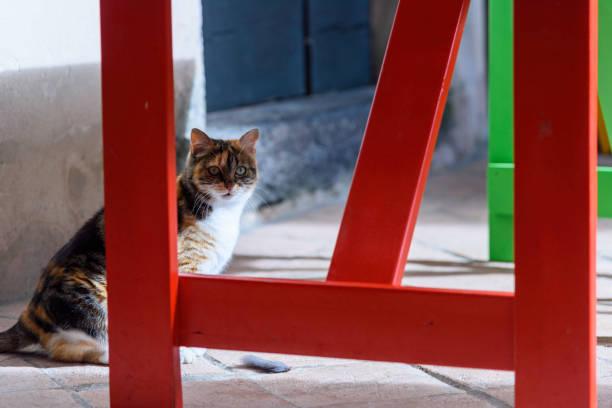 Domestic cat outside sunlight. stock photo