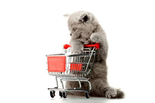 Domestic cat picture id1030543178?b=1&k=6&m=1030543178&s=612x612&w=0&h=ws5tmba6en3zfwyfhslfevxz all7mpfvq9drhw6fuo=