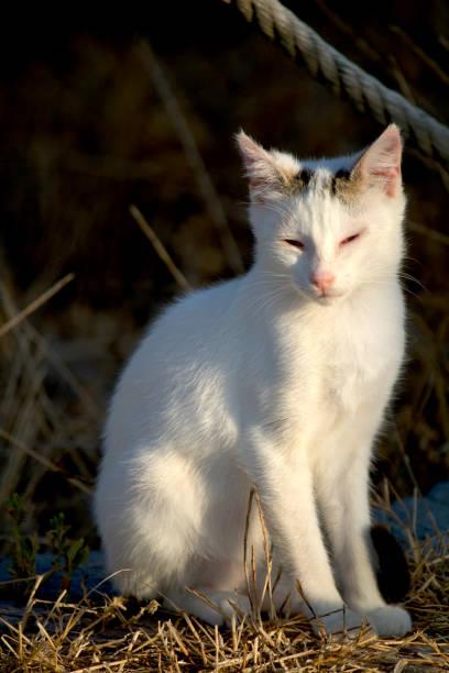 Domestic cat picture id1248790054?b=1&k=6&m=1248790054&s=612x612&w=0&h=cylvlurzztwwgykwfm7 x7jy4 c747ska5f6 oldaca=
