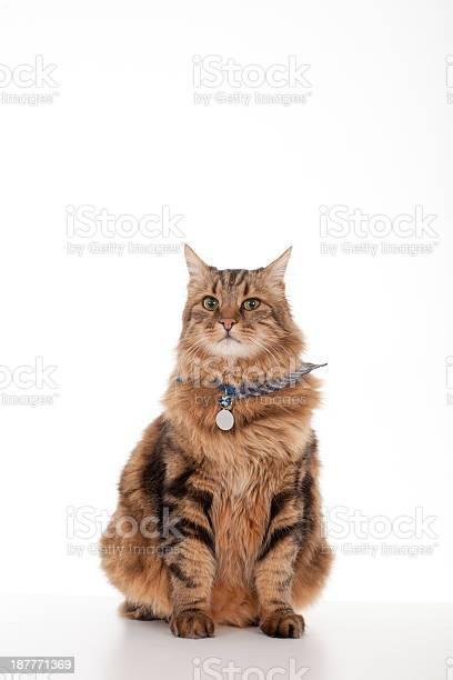 Domestic cat picture id187771369?b=1&k=6&m=187771369&s=612x612&h=n23a3ca i8v6e3fhqewivyaeah2 ut uowocv1dfhqc=