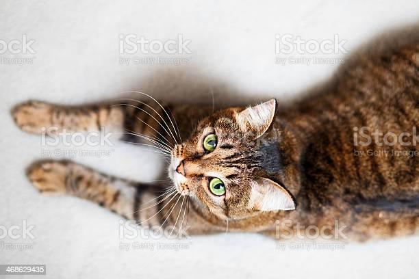 Domestic cat picture id468629435?b=1&k=6&m=468629435&s=612x612&h=x7zda0xh xoocrdyagztpy8t0nkreanvvv6jypeqkr8=