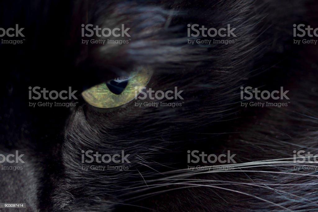 Cat in Close-Up