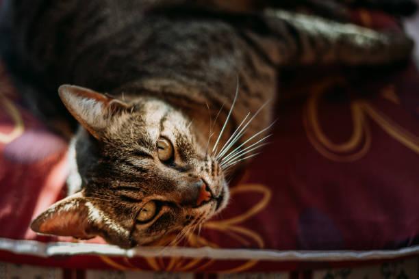 Domestic cat portrait picture id1141275649?b=1&k=6&m=1141275649&s=612x612&w=0&h= fifymrdvzwhdtfyjjuhzi8htihtqdvhuq89p4a2irm=