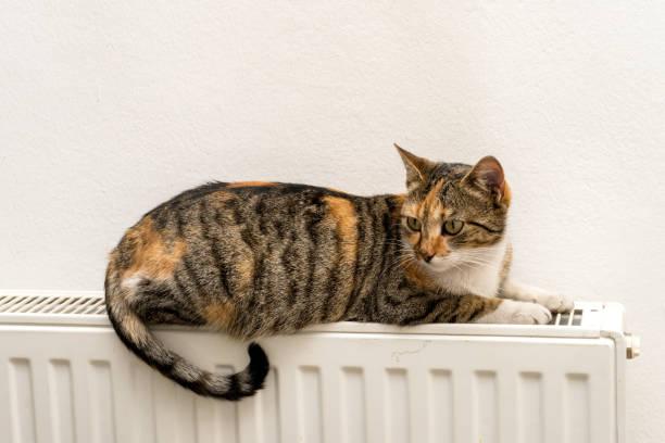 Domestic cat relaxing on a warm radiator picture id642917762?b=1&k=6&m=642917762&s=612x612&w=0&h=92wmks5wrjefpuruz7y6f1wkgwnfuawo4wwlejrxreo=