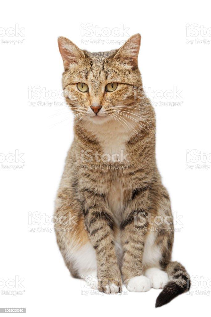 Die Katze sitzt und schaut geradeaus – Foto