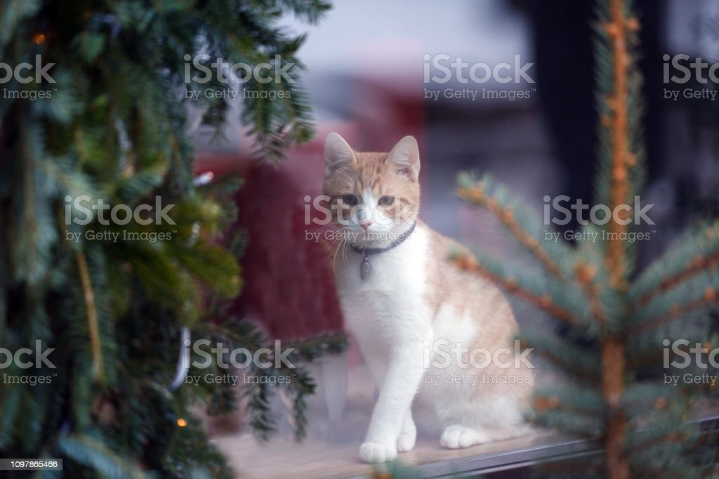 Domestic cat sitting in shop window. Small business ideas, attracting...