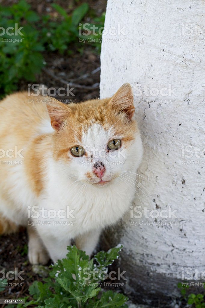 Domestic cat sitting on the ground, looking at camera stock photo
