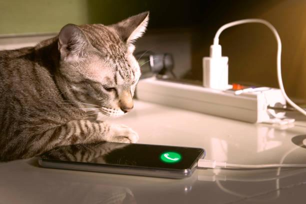 Domestic cat waiting for charging mobile phone picture id1069576006?b=1&k=6&m=1069576006&s=612x612&w=0&h=cff39vvmnqcpx2blihkcglenwmvpndun6ilw95gmrfu=