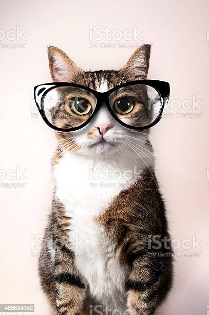 Domestic cat with eyeglasses picture id488634342?b=1&k=6&m=488634342&s=612x612&h=ayoxy7aiajfsfmbymunf4rqenwc7lqn92noa1fbmxqa=