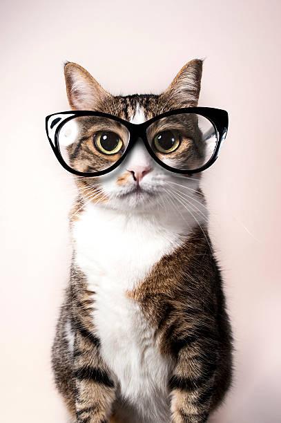 Domestic cat with eyeglasses picture id488634342?b=1&k=6&m=488634342&s=612x612&w=0&h=hmvzmyihlptllbwsinssqjl80kqdi6spk4y7ogml3xg=